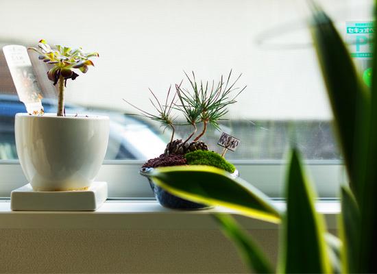 松ぼっくり盆栽1.jpg